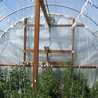 Vegetables thrive in high tunnel with solar air heat