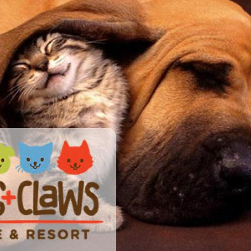 Paws + Claws Rescue & Resort installs solar PV